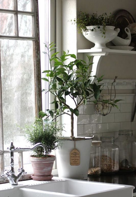 herb plants in kitchen window
